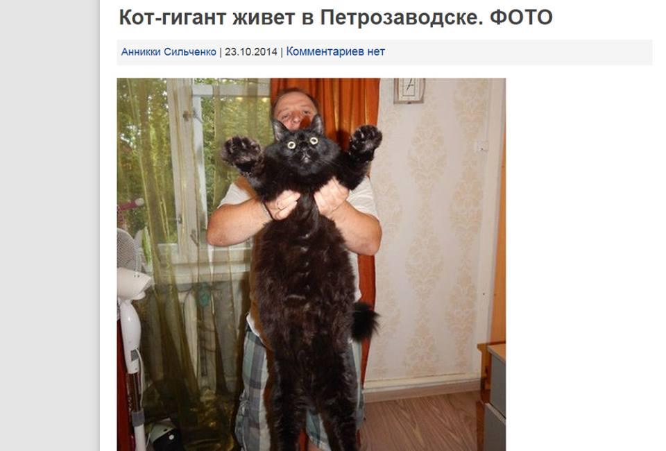 Кот-гигант. Комментариев нет