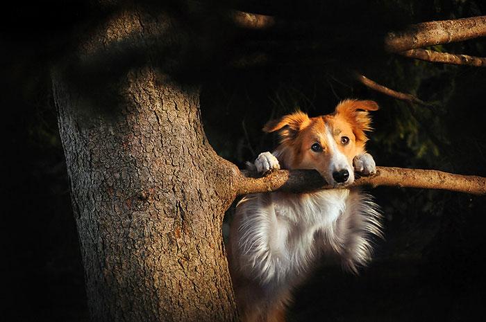 dog-photography-ksenia-raykova-53