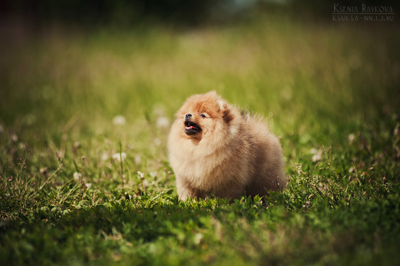dog-photography-ksuksa-raykova-3
