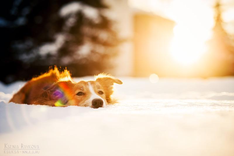 dog-photography-ksuksa-raykova-6