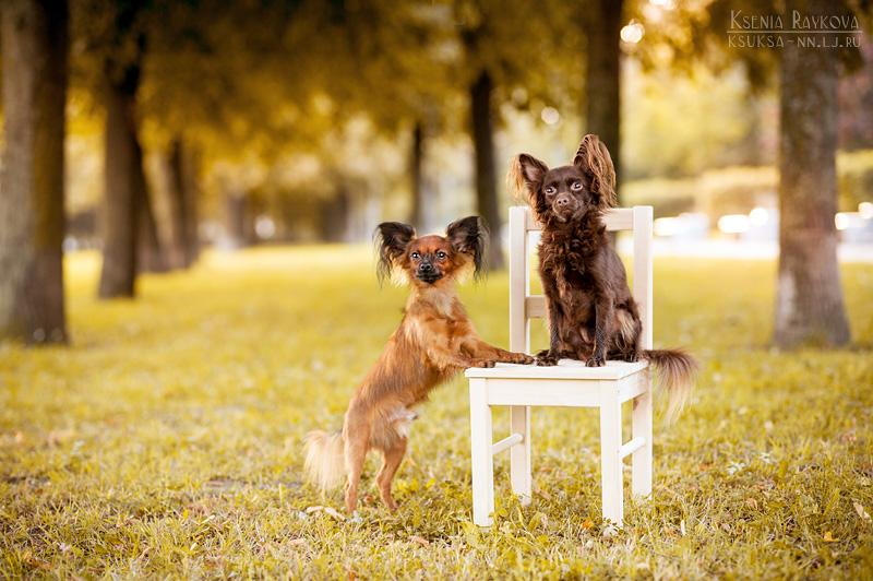dog-photography-ksuksa-raykova-20