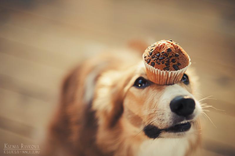 dog-photography-ksuksa-raykova-25