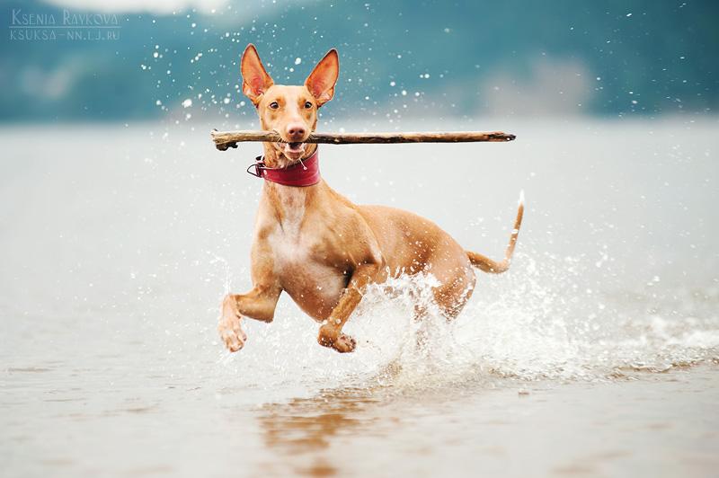 dog-photography-ksuksa-raykova-43