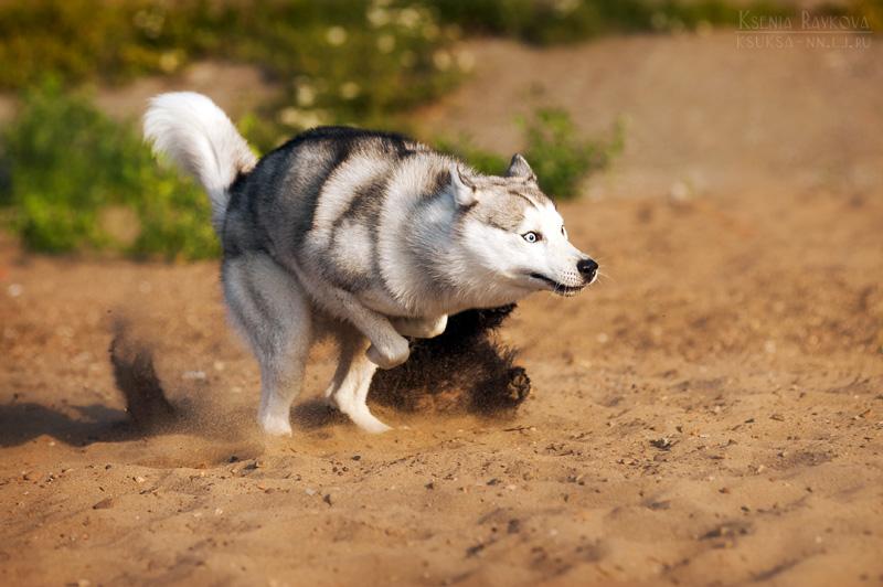 dog-photography-ksuksa-raykova-51