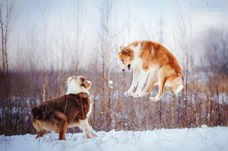 dog-photography-ksuksa-raykova-81