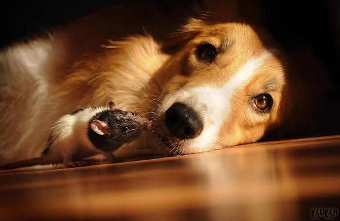 dog-photography-ksuksa-raykova-60
