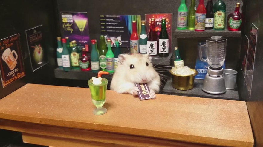 hamster-bartender-miniature-bar-kawanabesatou-113