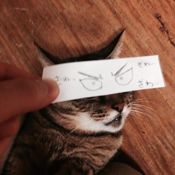 cartoon-anime-eyes-cat-montage-4__605