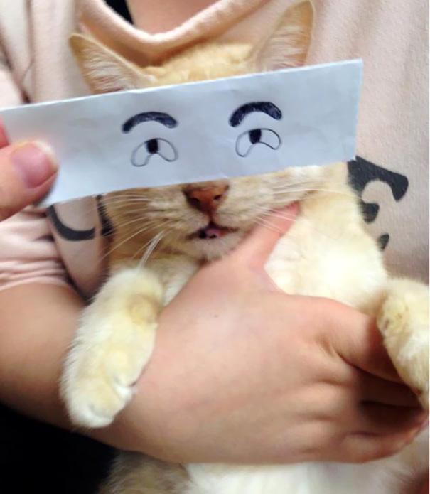 cartoon-anime-eyes-cat-montage-10__605