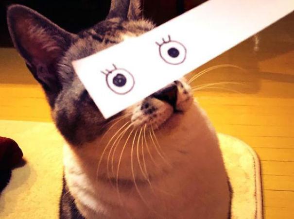 Новый японский котомем - «neko montaaju»