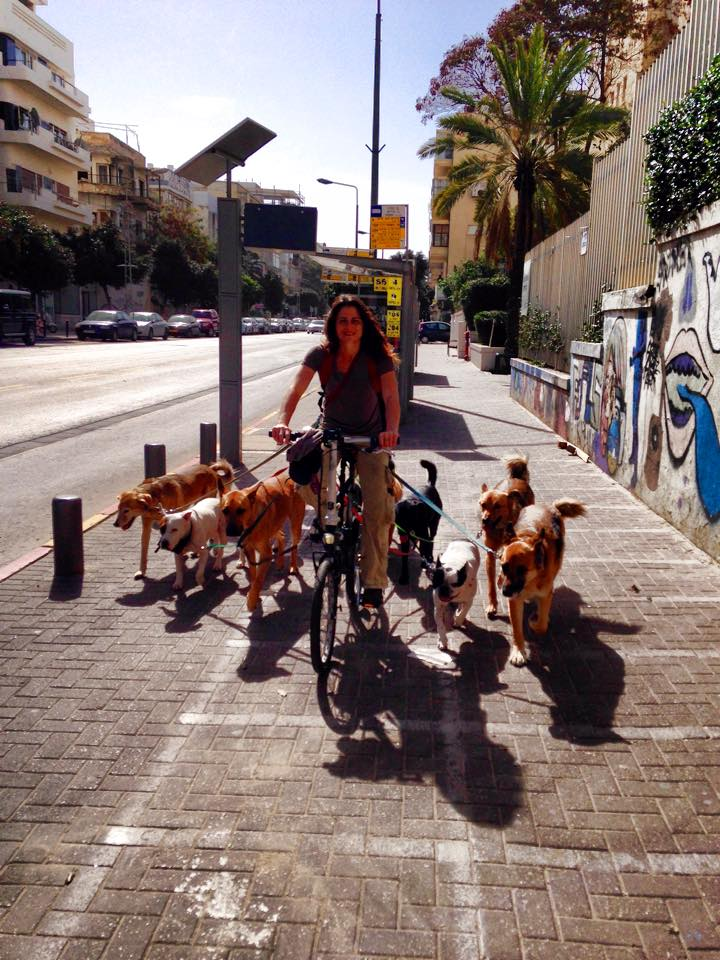 Выгул собак в Тель-Авиве