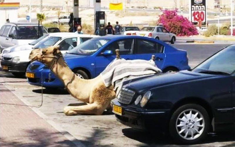 13 удивительных вещей, которые можно увидеть только в Израиле
