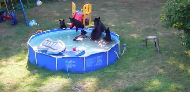 Запредельной мимишности видео. Медвежата купаются в детском бассейне