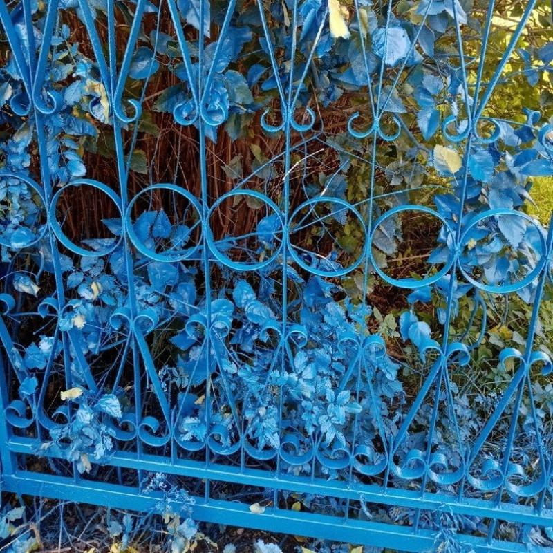 В Нижегородской области школьный забор покрасили в синий цвет вместе с растениями