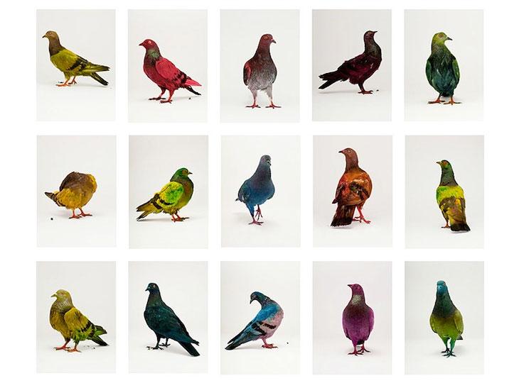 Птицы, раскрашенные птицы