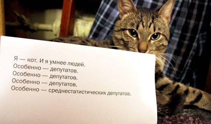 политика, кот, депутаты