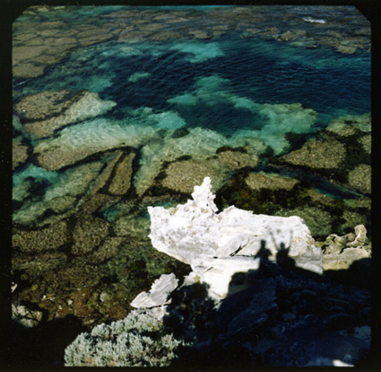 rottnest_island