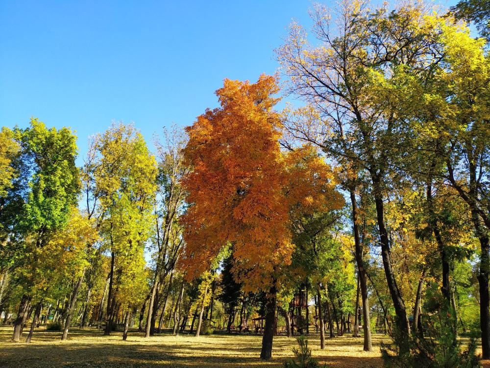 Заехали,  наконец-то,  в парк Горького. Живем в 10 минутах ходьбы пешком,  а выбраться удается раз в месяц,  если не реже.  Правда,  младшей быстро надоело любоваться речкой и деревьями, и мы переместились на детскую площадку)