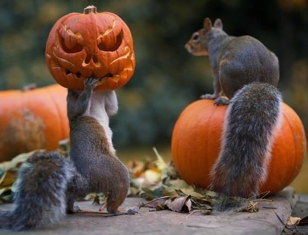 хеллоуин белка