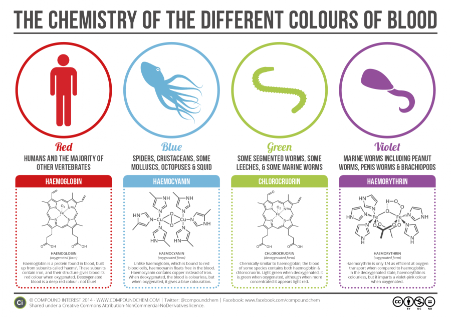 The-Chemistry-of-Blood-Colours (1)