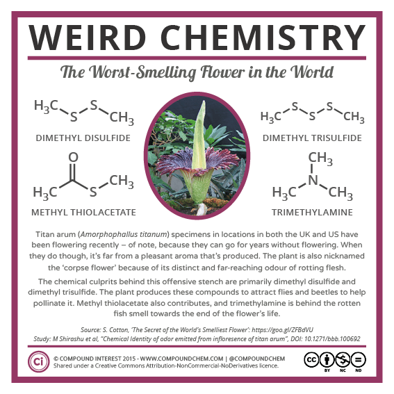 Weird-Chemistry-21-The-Smell-of-the-Corpse-Flower