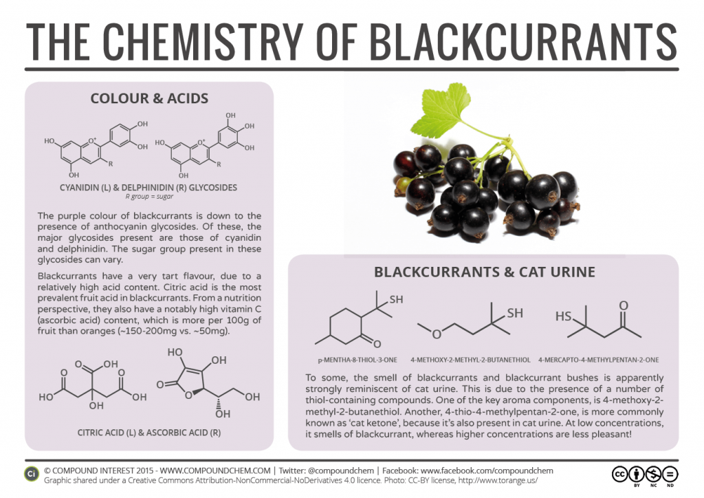 Food-Chemistry-–-The-Chemistry-of-Blackcurrants-1024x724