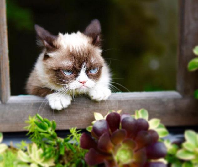 Grumpy UG