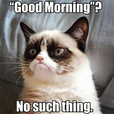Grumpy_Cat_006