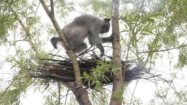 si-monkeytrick