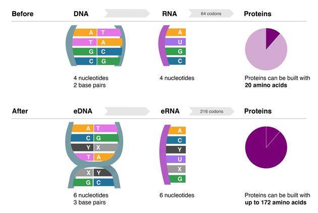 DNA_infograph_630m (1)