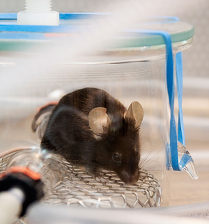 mouse_14-05617-large2_300m