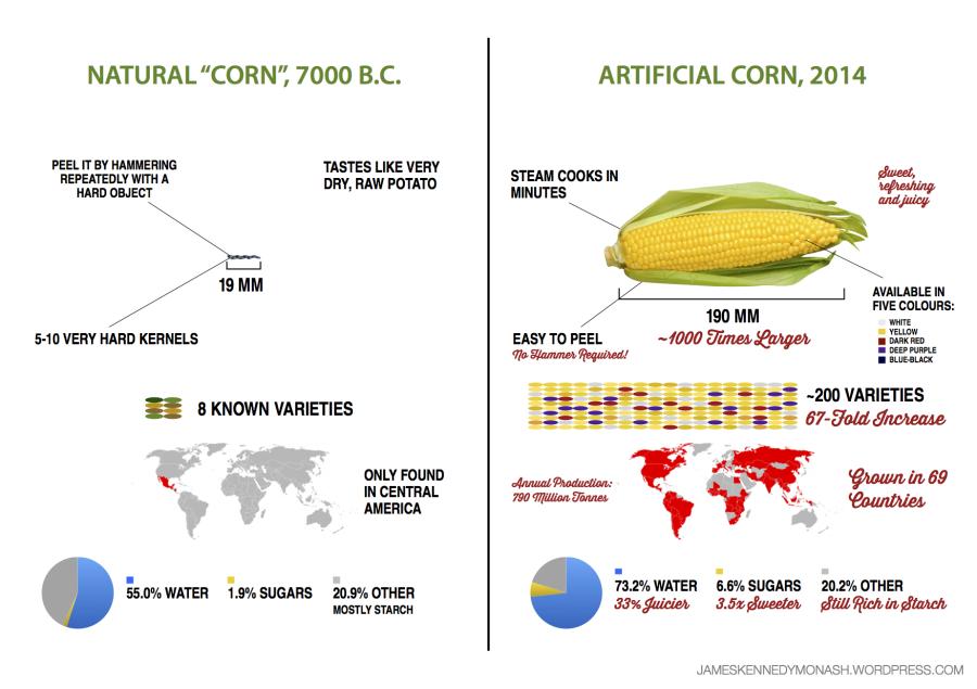 artificial-natural-corn