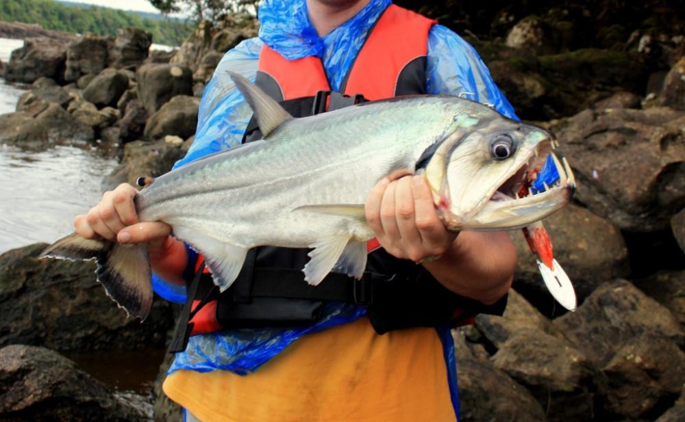на че клюет рыба