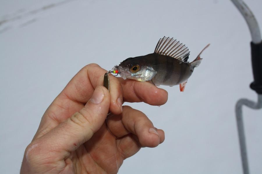 ловят ли рыбу на маныче