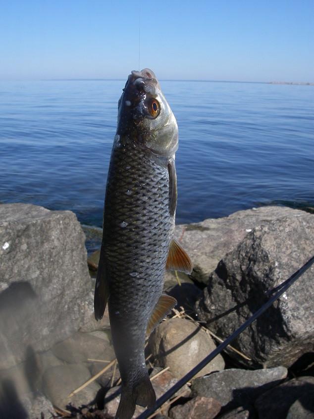 не клюет рыба в июне