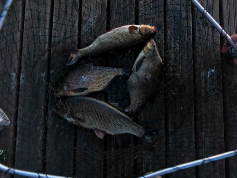 О рыбалке в Суоми...