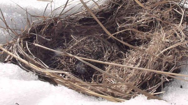 Гнездо ежа - Записки жизнерадостного пессимиста