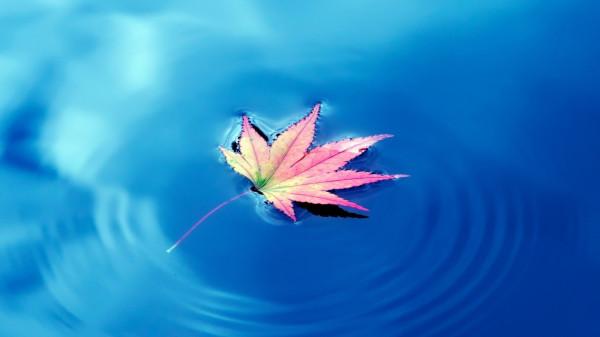 list-v-vode