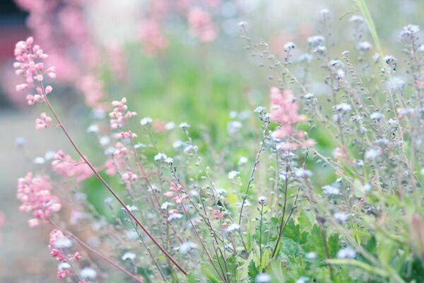 01-полевые-цветы
