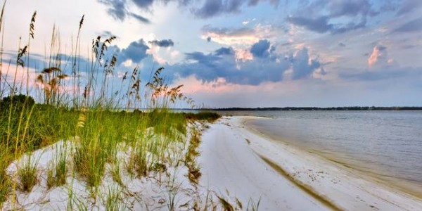 Panoramic-Landscape-with-Green-Grass-and-Sea-Oats_art