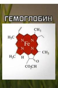 gemoglobin
