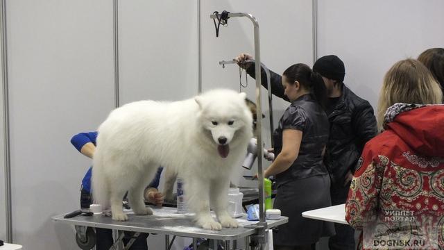Выставка собак в декабре
