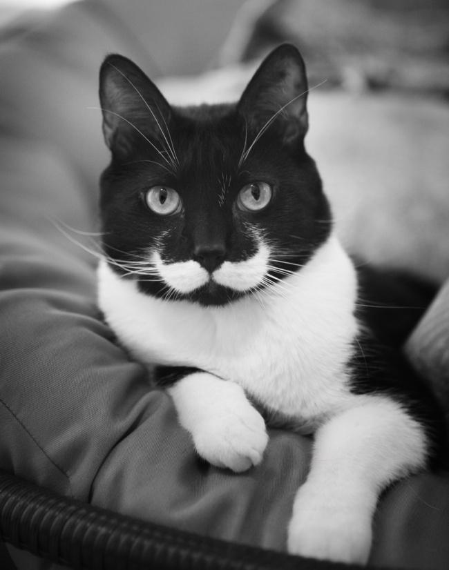 Картинки по запросу Кошки с самыми наобычными раскрасами от природы