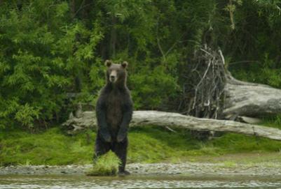 Медведь-людоед