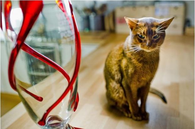 Самый красивый кот в мире