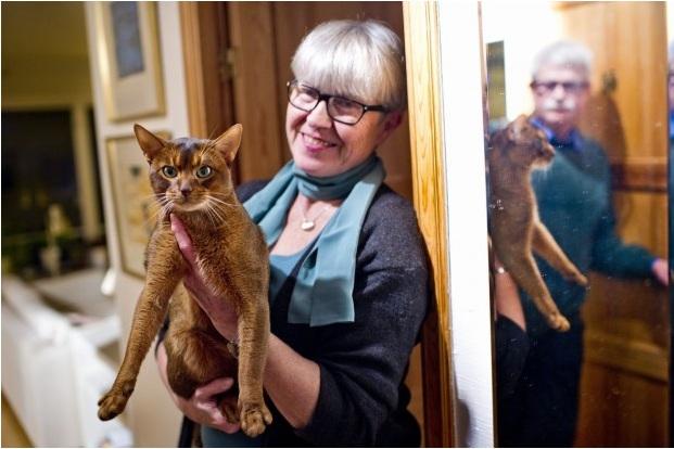 Самый красивый кот в мире - Негус