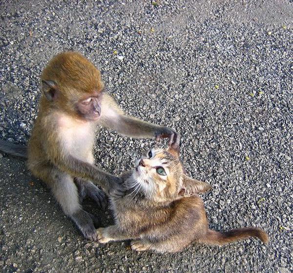 Открытки, котенок с обезьянкой картинки