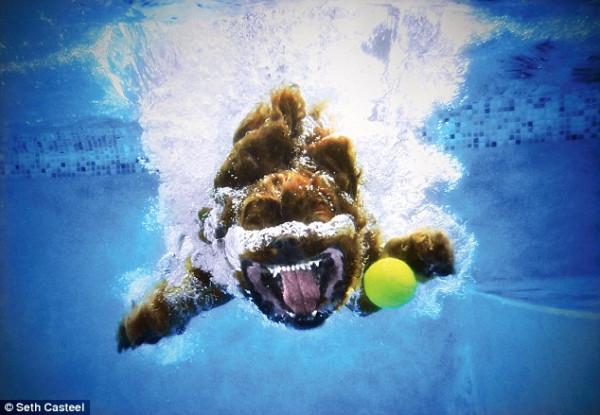 dog-underwater-12