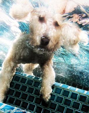 dog-underwater-10