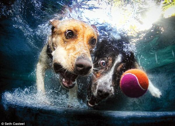 dog-underwater-9